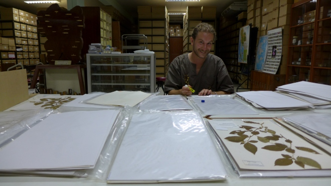 Some species are easier to find in the collections than on the field... here in Khon Kaen University, Northeastern Thailand, 2014 (Credit: X. Aubriot)