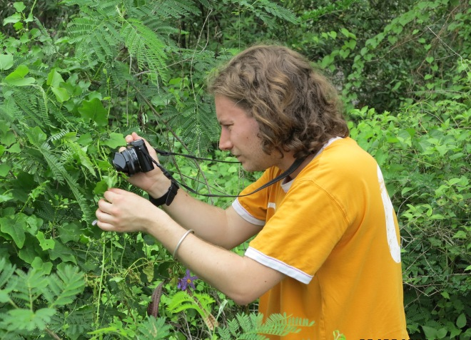 Taking pictures of the viny (and dreadfully spiny) Solanum trilobatum L., a widely distributed Asian species... Here mangrove forests edges, near Bangkok, 2014 (Credit: X. Aubriot)
